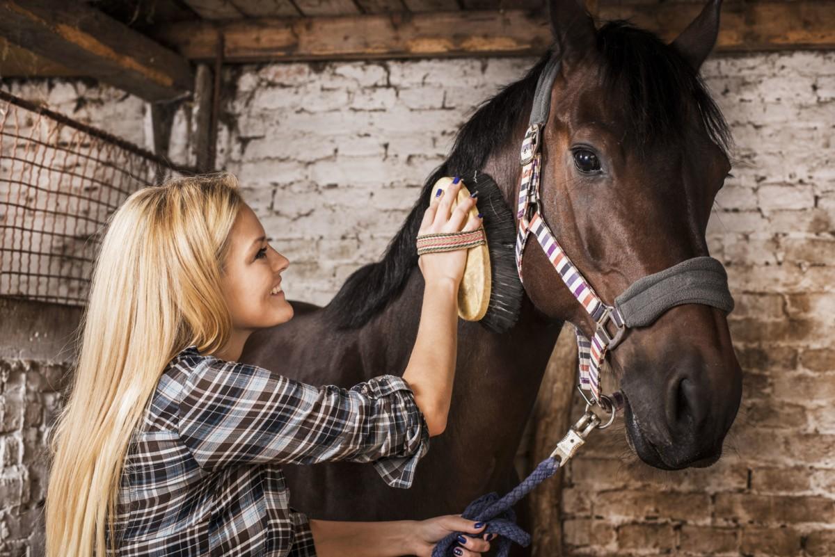 Come fare a pettinare e lucidare la criniera e la coda del cavallo