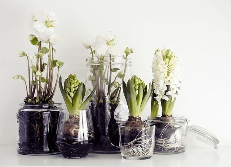 come coltivare i bulbi