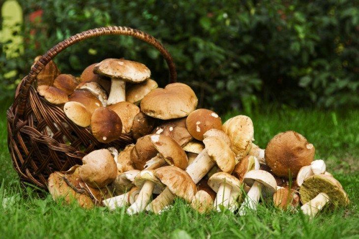 come conservare i funghi