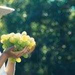 Come fare la cura dell'uva