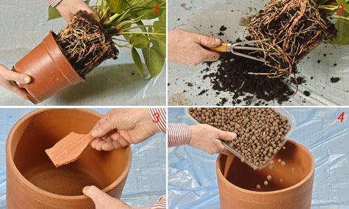 Come rinnovare il substrato