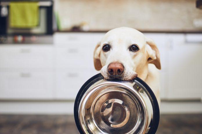 Come scegliere il cibo per cani