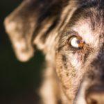 """La bocca del cane assume significati diversi a seconda della posizione assunta dagli altri organi """"indicatori""""."""