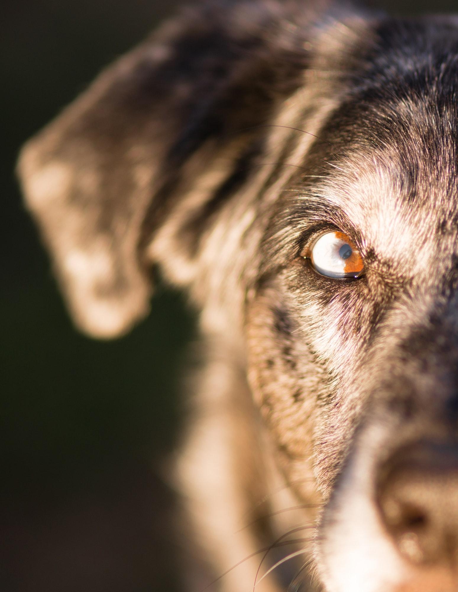 Come Capire il Linguaggio del Cane
