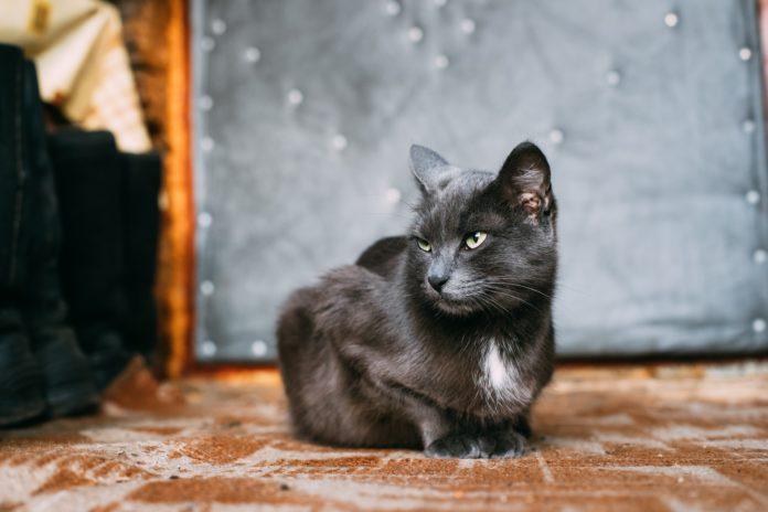 come addomesticare un gatto